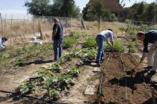 Estudiantes, profesorado y personal de administración y servicios gestionan los huertos urbanos de la Olavide