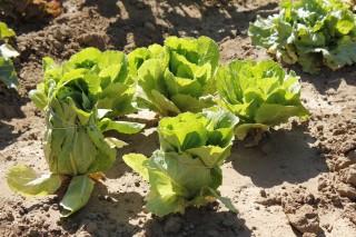 Los huertos se rigen bajo las premisas de la agricultura ecológica.