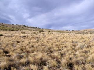 Argentina. El muestreo de campo ha consistido en una observación directa de 224 ecosistemas de 16 países