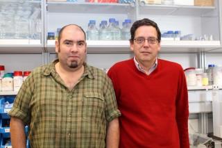 José Luis Gómez Skarmeta (izquierda) y Jaime Carvajal, otro de los investigadores autores del trabajo publicado en Genome Research