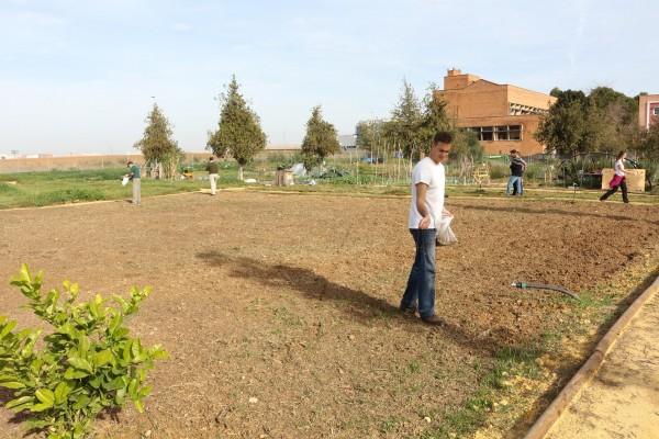 Miembros de la comunidad universitaria han llevado a cabo  la plantación de la leguminosa Vicia sativa.