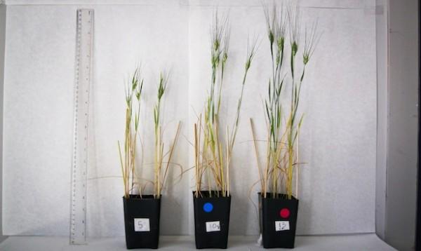 Los científicos han demostrado que el uso de biocarbón potencia la producción de los cultivos agroalimentarios