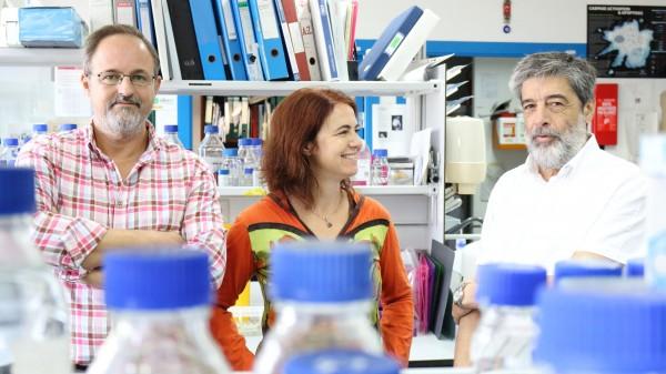 De izquierda a derecha, Guillermo López-Lluch, Elisabet Rodrígues-Bies y Plácido Navas en su laboratorio del CABD