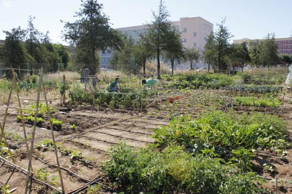 Los huertos de la Universidad Pablo de Olavide ocupan un terreno junto al edificio Celestino Mutis de 2.000 metros cuadrados.