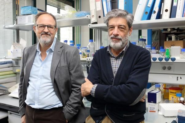 De izquierda a derecha, los catedráticos de Biología Celular de la UPO Guillermo López-Lluch y Plácido Navas.