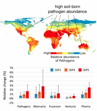 Zonas en las que se verá incrementada la proporción de patógenos