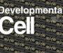 Investigadores emplean la tecnología CRISPR-Cas para estudiar el papel del ARN en las primeras horas de desarrollo
