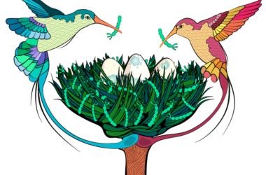 Alegoría que representa células troncales (huevos) del ovario de Drosophila en su nicho (nido). Los pájaros simbolizan células 'cap' del nicho depositando la proteína Perlecan en la matriz extracelular. Ilustración científica por María C. Díaz de la Loza.