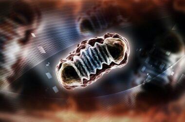 Ilustración 3D de una mitocondria. Shutterstock / RAJ CREATIONZS
